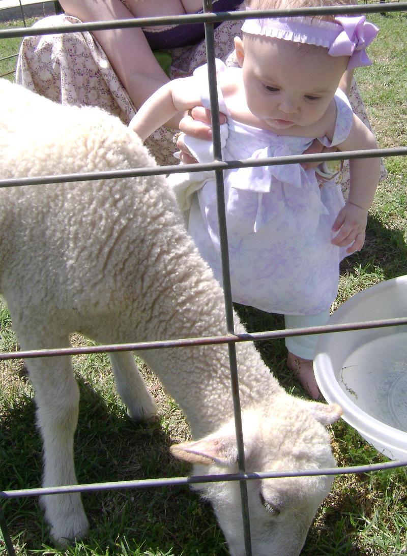 Lamb and Hannah